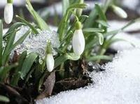 организм весной